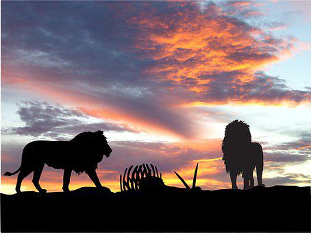 Sunset, Silhouette, Nature, Lions, Kill, Africa