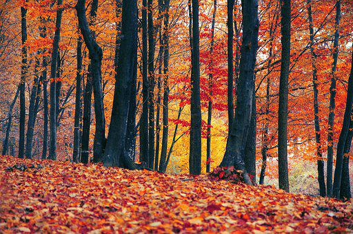 Fall, Leaf, Wood, Season, Tree, Nature, Landscape, Gold