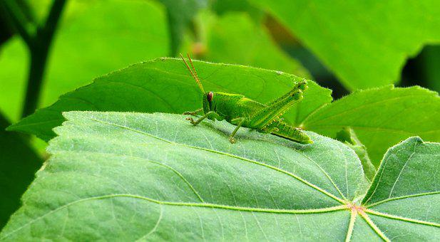 Leaf, Plant, Nature, Approach, Cricket, Armenia