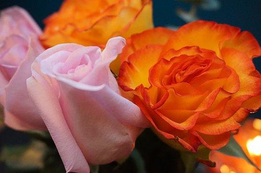 Flower, Rose, Petal, Romance, Floral, Bouquet