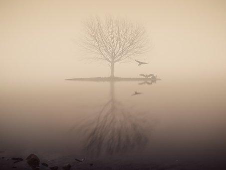 Fog, Lake, Tree, Mirroring, Silhouette, Mood, Skies