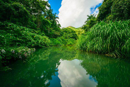 Waters, Nature, River, Tree, Landscape, Lake, Summer