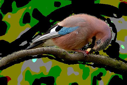 Bird, Animal World, Animal, Nature, Bill, Plumage