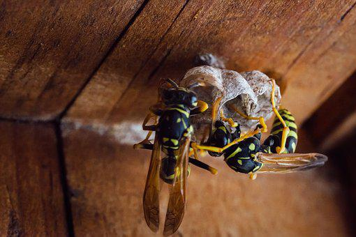 Insect, Nature, Animal, Wood, Wasp, Closeup, Macro