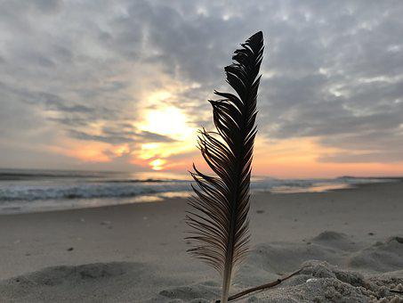 Feather, Sunrise, Beach, Sand, Coast, Waters, Sea