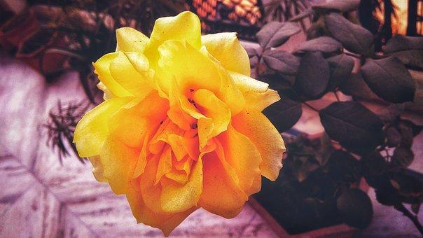 Flower, Nature, Color, Flora, Leaf, Beautiful, Garden