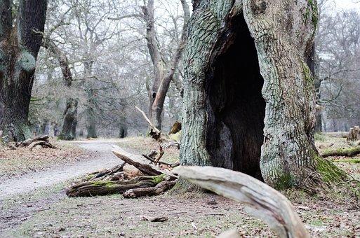 Tree, Fairy Tale, Tinderbox, Hc Andersen, Magic