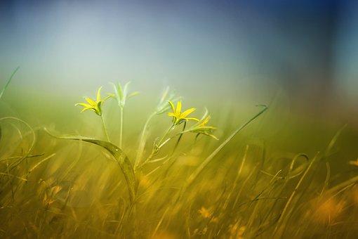 Nature, Grass, Field, Summer, Haymaking, Landscape