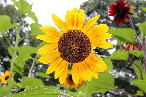 Flora, Nature, Leaf, Summer, Flower