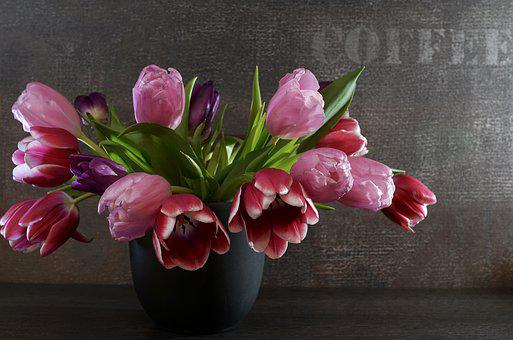 Flower, Plant, Tulip, Nature, Still Life, Mood, Flowers