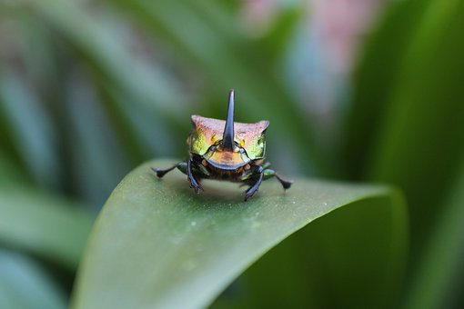 Insect, Nature, Leaf, Outdoors, Invertebrate, Beetle