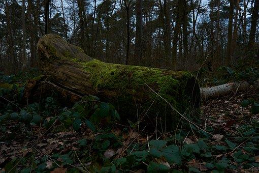 Wood, Tree, Nature, Landscape, Environment, Leaf, Moss