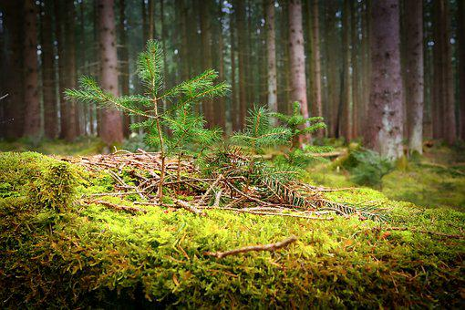 Wood, Nature, Tree, Moss, Leaf, Forest, Forest Floor