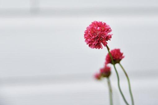 Nature, Flower, Flora, Summer, Leaf, Bright, Garden
