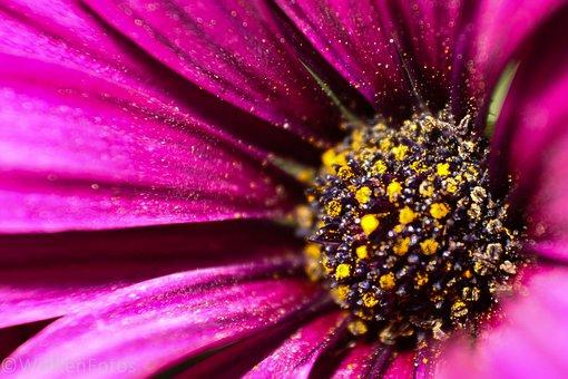 Flower, Nature, Plant, Summer, Color, Garden, Petal