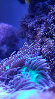 Underwater, Coral, Nature, Ocean, Color