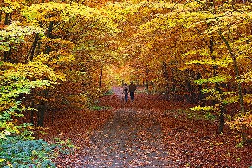 Autumn, Leaf, Nature, Tree, Maple, Path, Landscape