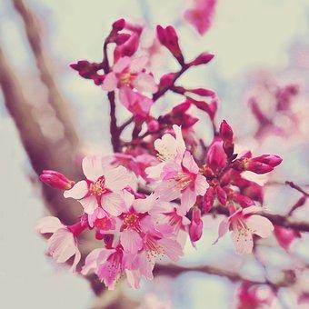 Flower, Flora, Branch, Nature, Petal, Color, Tree