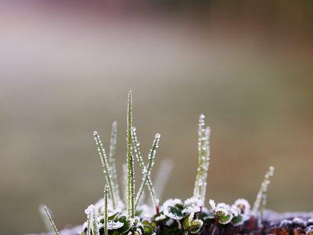Nature, Outdoor, Flower, Plant, Leaf, Lawn, Petit