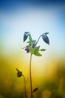 Nature, Shoots, Plant, Sheet, Flower, Grass, Garden