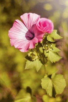 Flower, Nature, Plant, Sheet, Petal, Summer, Garden