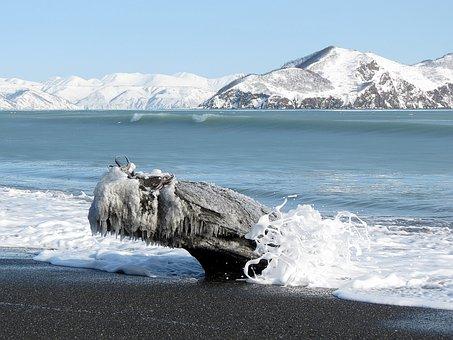 Ocean, Sea, Beach, Coast, Calm, Starfish, Ice, Snow