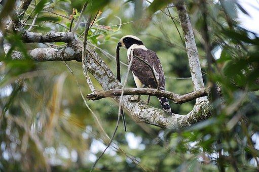 Birds, Wild Life, Tree, Nature, Animalia, Wild, Nest