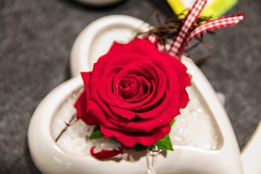 Rose, Flower, Blossom, Bloom, Red, Romantic