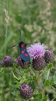 Nature, Flower, Summer, Flora, Garden, Closeup, Insect