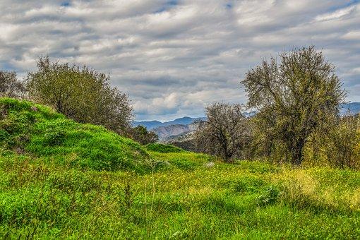 Nature, Landscape, Tree, Panoramic, Grass, Field