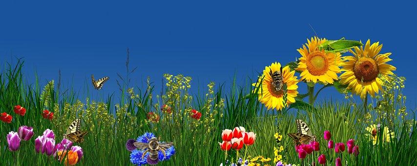 Flower, Nature, Summer, Plant, Field