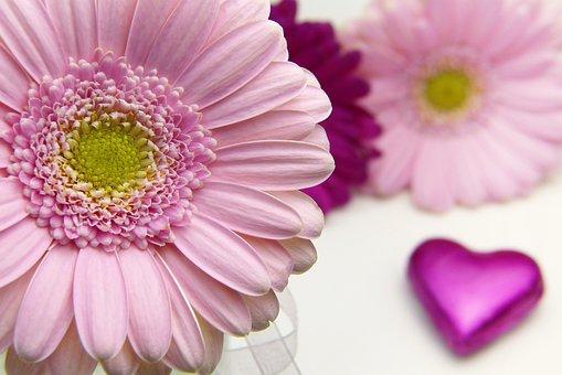 Flower, Plant, Petal, Nature, Floral, Valentine's Day