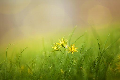 Grass, Field, Nature, Summer, Spring, Flowers, Beauty