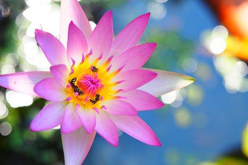 Flower, Plant, Nature, Garden, Petal, Summer, Beautiful