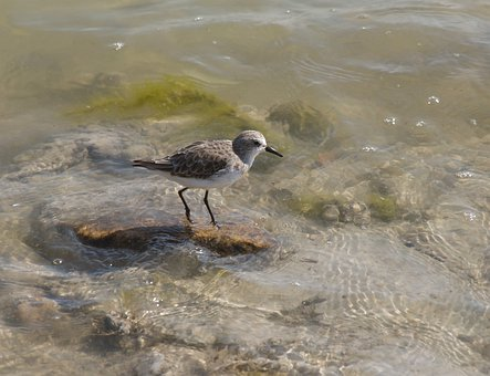 Body Of Water, Nature, Birds, Wild Life, Outdoors