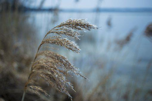 Nature, Waters, Grass, Environment, Autumn