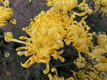Flower, Nature, Flora, Garden, Floral, Outdoors, Growth