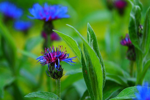 Nature, Plant, Flower, Summer, Leaf, Close, Wild Flower