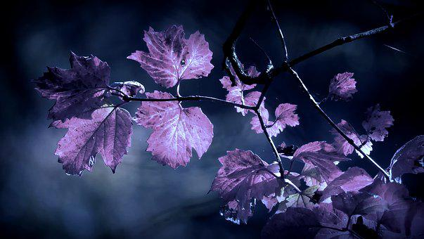 Nature, Plant, Outdoor, Leaf, Winters, Forest, Cold