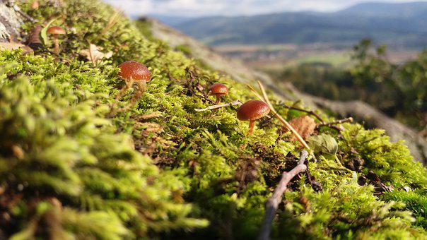 Mushrooms, Moss, Nature