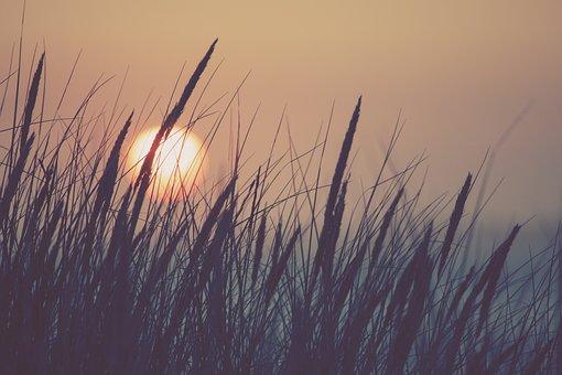 Nature, Sun, Grass, Sunset, Sky, Reed, Summer