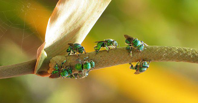 Insect, Outdoors, Invertebrate, Nature, Wild Life