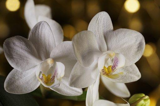 Flower, Plant, Petal, Nature, Flowers, Floral, Orchid