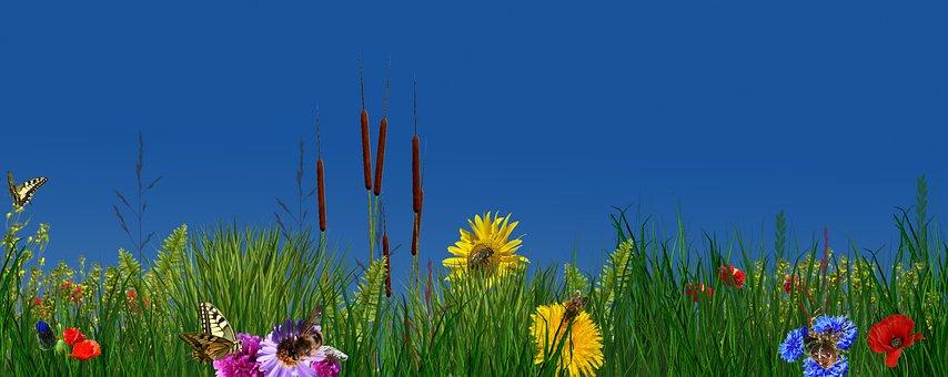 Flower, Nature, Plant, Field, Summer