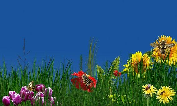 Nature, Flower, Plant, Field, Grass