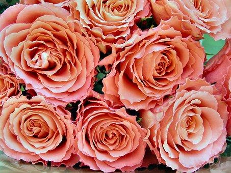 Rose, Bouquet, Petal, Love, Flower, Romance, Blooming