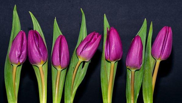 Purple, Violet, Flowers, Spring, Cut Flowers, Closed