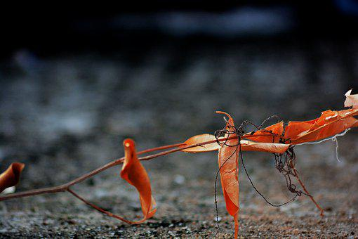 Nature, Invertebrate, Wildlife, Outdoors, Insect, Wild