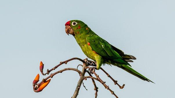 Bird, Nature, Animal, Wildlife, Wing, Parrot, Beautiful