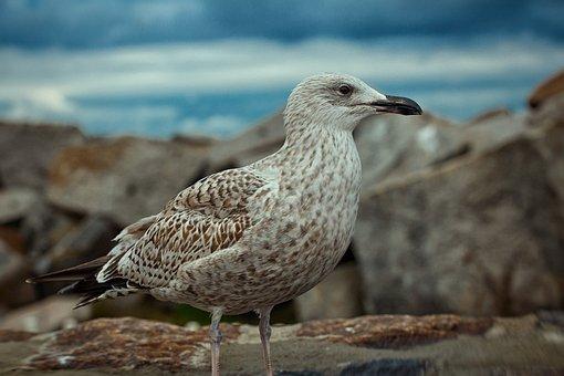 Animal World, Bird, Nature, Animal, Wing, Feather, Wild